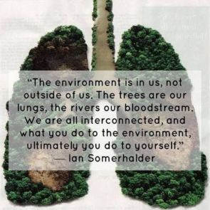 Vegan Lungs Deforestation